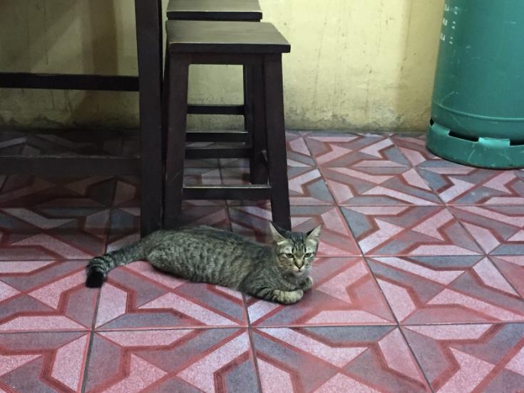 แมวไม่มีชื่อ1_#Catclubguest