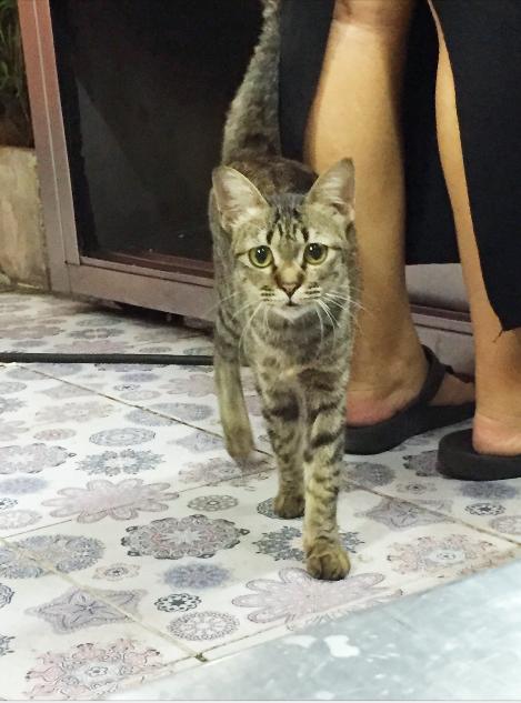 แมวไม่มีชื่อแต่น่ารัก_#Catclubguest
