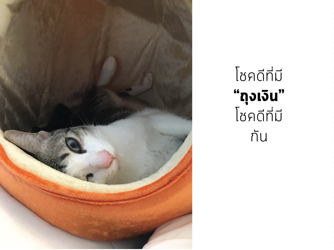 Catclubguest8_motherday