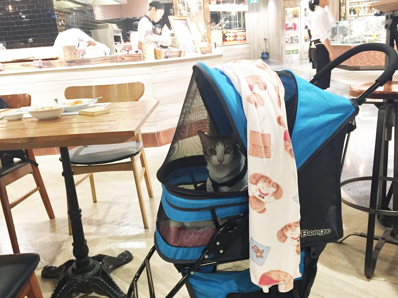 แมวนั่งรถเข็นมาเที่ยวห้าง