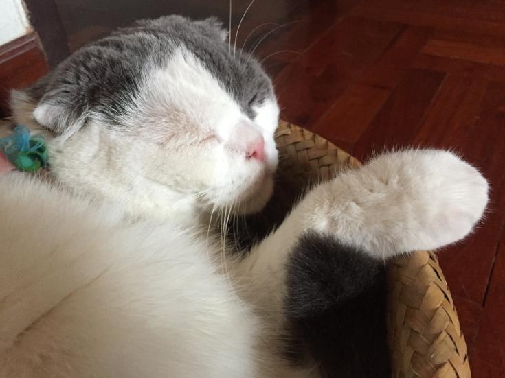 การได้เลี้ยงแมวสักตัวไม่ใช่ความไม่บังเอิญ