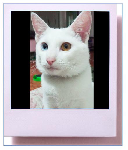 แมวขาวมณีตาสองสี