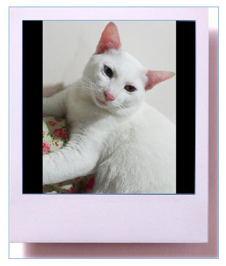 แมวจรเลี้ยงดีๆ ก็น่ารักมาก -Catclubguest