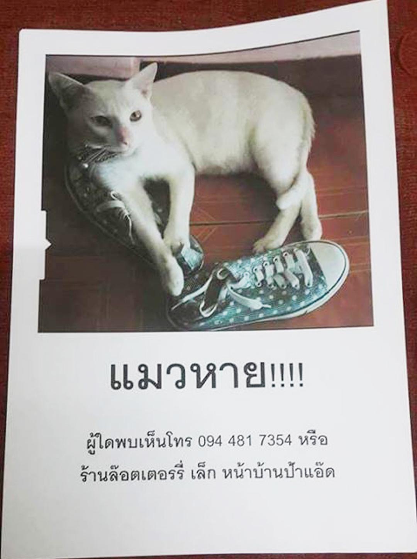แมวหาย Blog แมว จาก aorcatclub
