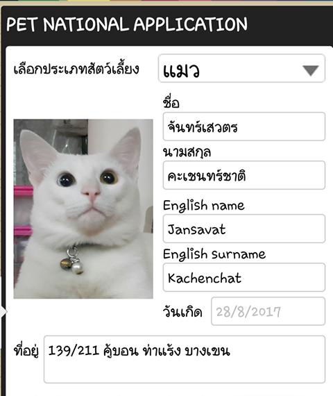 สูจิบัตรแมว