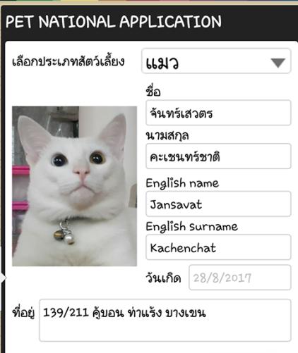 แมวจรเก็บจากตลาด น่ารัก ขี้อ้อนสุดๆ _Catclubguest