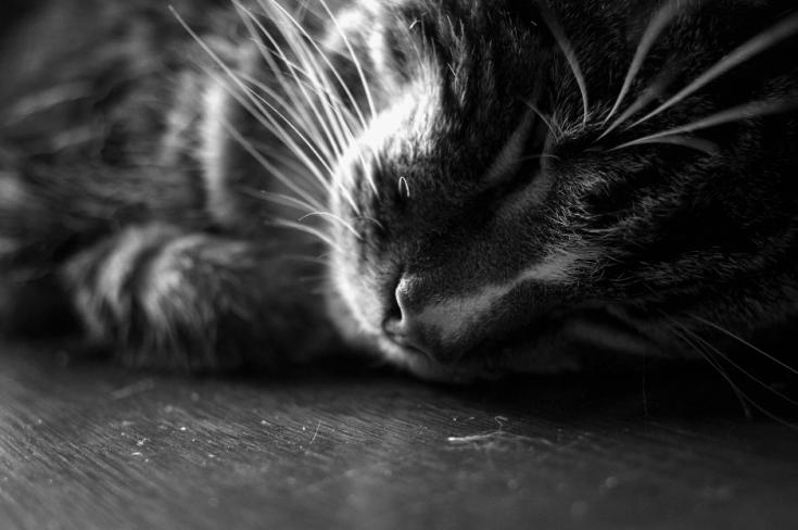 แมวเครียดทำให้ป่วยง่าย_catclub
