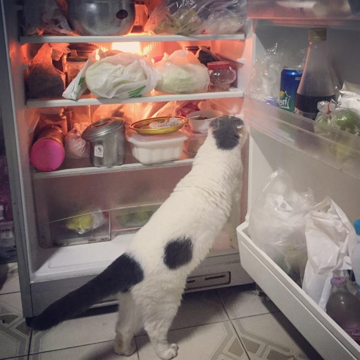 กินขนมก็ช่วยให้แมวหายเครียดได้นะเออ