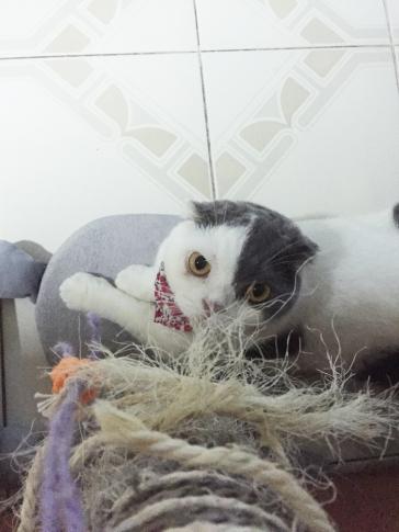 แก้แมวเครียดด้วยการให้แมวลับเล็บ