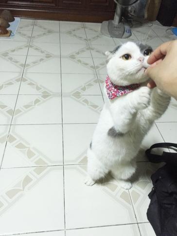 เล่นกับแมวช่วยแมวหายเครียดได้