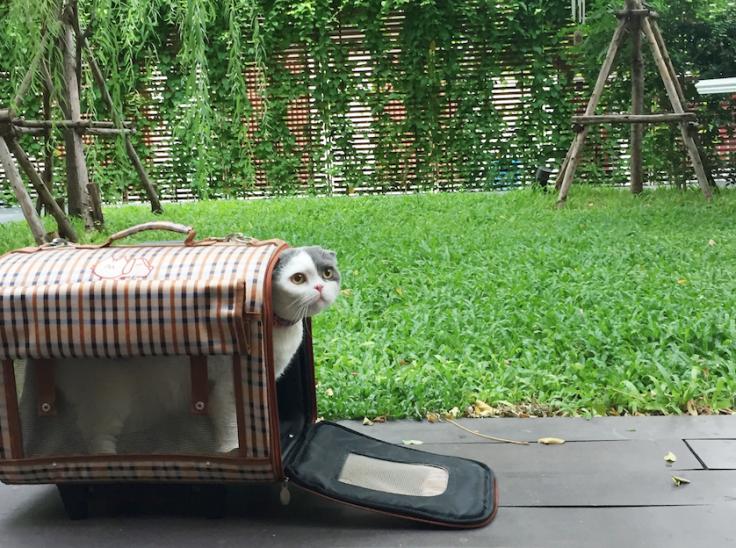 แมวติดบ้าน