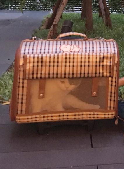 แมวกระเป๋า