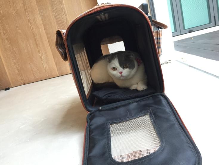 โกเมส แมวติดบ้าน
