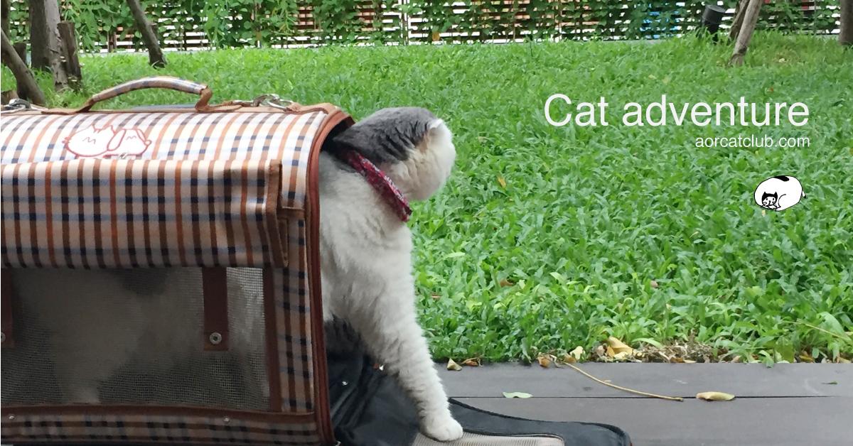 พาแมวติดบ้านไปเที่ยว