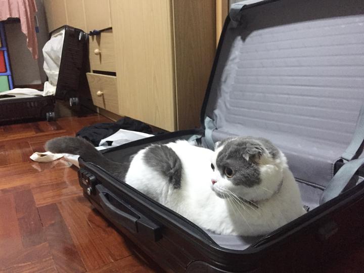 โกเมส แมวเข้าไปนั่งในกระเป๋าเดินทาง