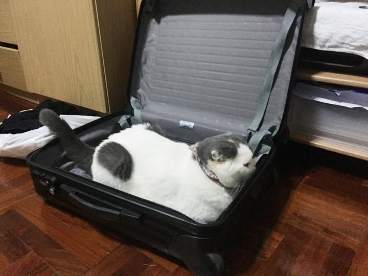 โกเมส แมวในกระเป๋าเดินทาง