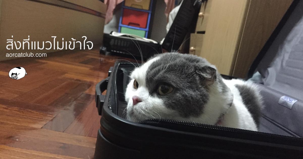 เมื่อหนีแมวไปเที่ยว