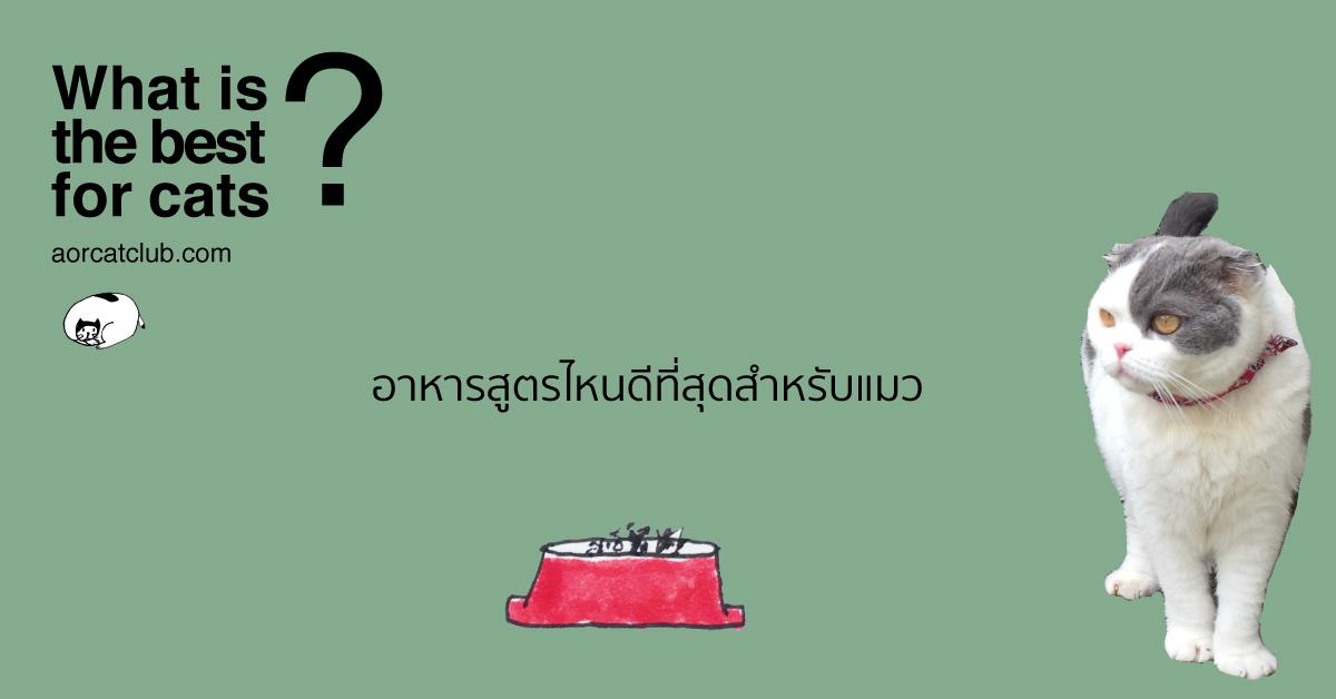 เลือกอาหารแมวอย่างไรให้เหมาะที่สุด