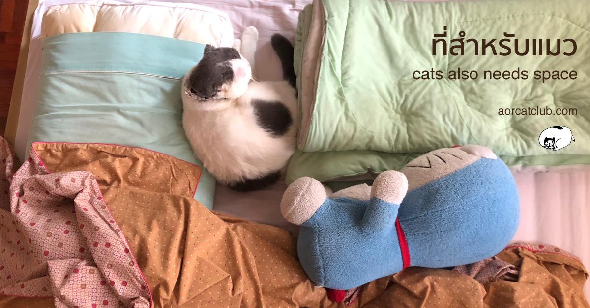 แมวโกเมสชอบนอนที่แปลกๆ