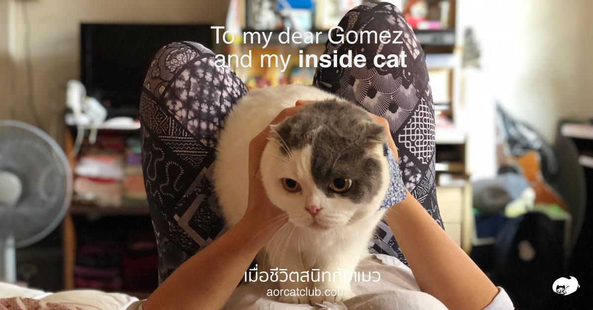 แมวเป็นหนุ่มอายุ 5 ขวบ