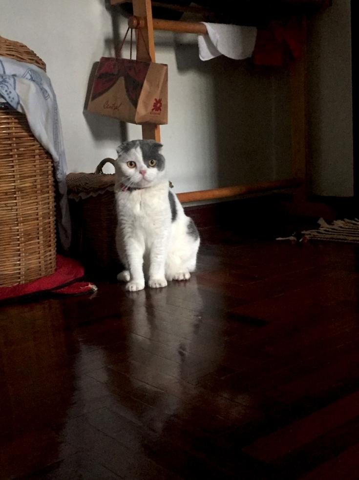 แมวเก็บตัวไม่ชอบคนแปลกหน้า
