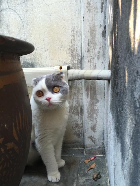 วิธีฝึกแมวโตให้กลัวคนน้อยลง