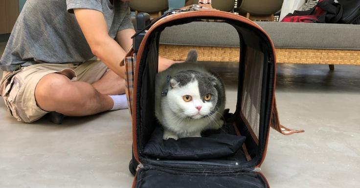 แมวกลัวคนแปลกหน้า