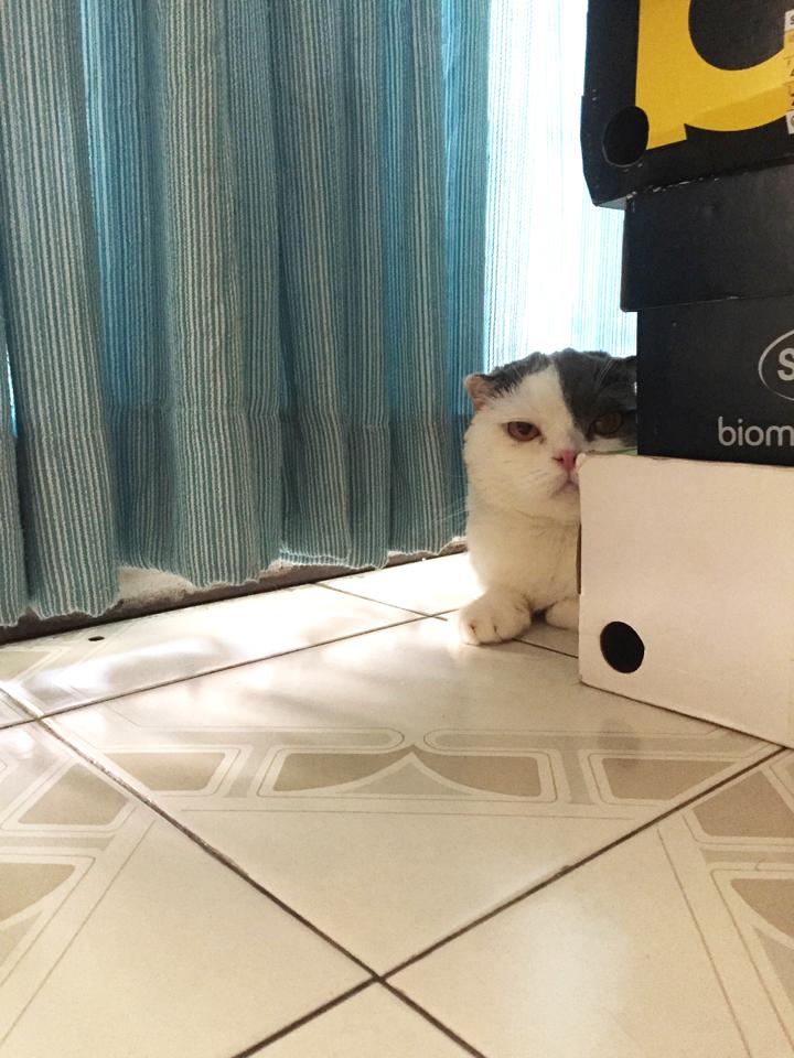 ฝึกแมวให้คุ้นเสียงดัง