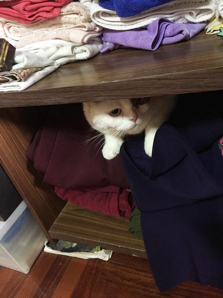 แมวตกใจเสียงพลุจนต้องหาที่ซ่อน