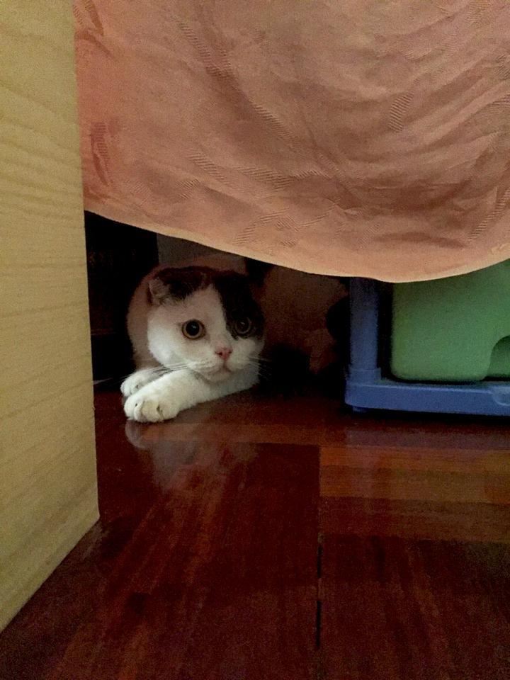 ที่ซ่อนของแมว