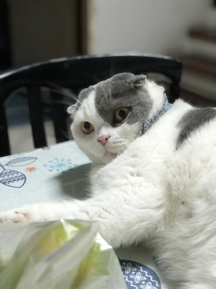 วิธีทำให้แมวไม่ตกใจเสียงดังของพลุหรือประทัด