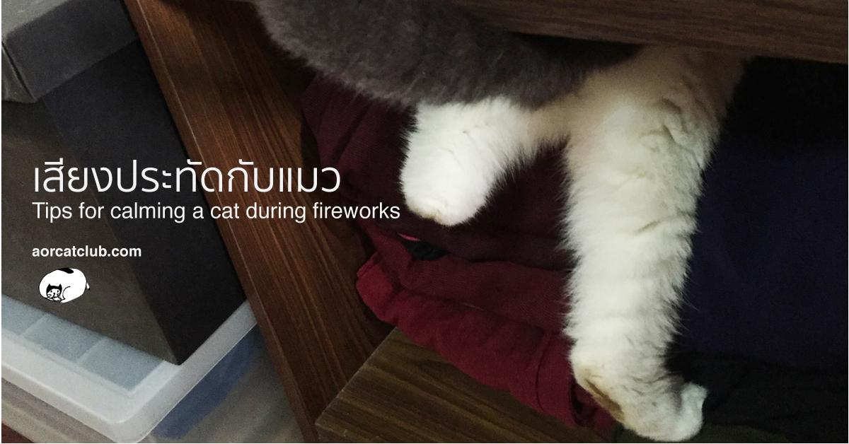 วิธีดูแลแมวจากเสียงพลุหรือเสียงประทัด