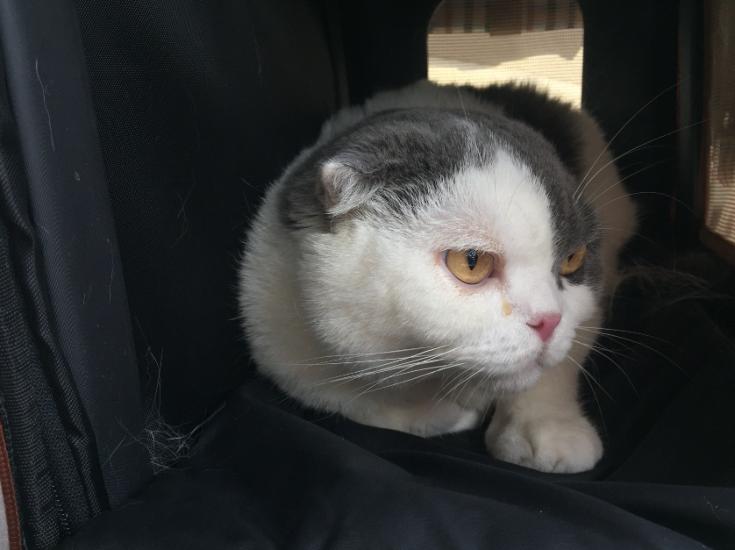 แมวเศร้าได้จากหลายเรื่อง