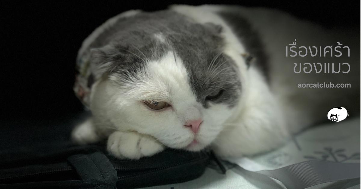 อะไรทำให้แมวเศร้า