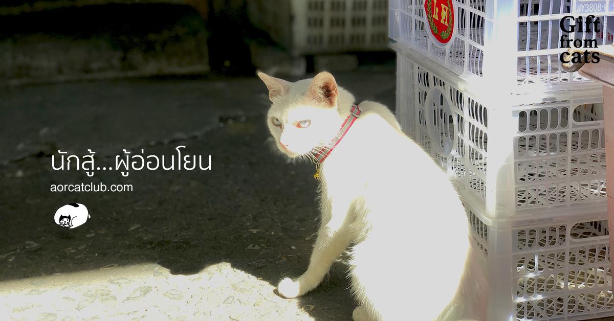 สัณชาตญาณแมว