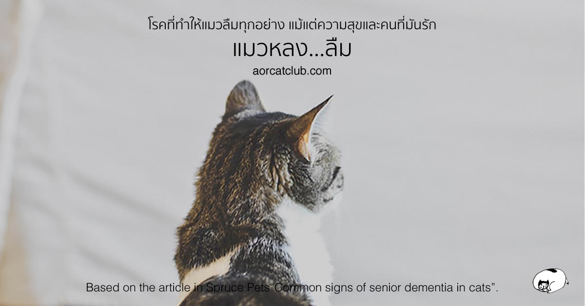 แมวแก่เป็นโรคสมองเสื่อมได้เหมือนคน