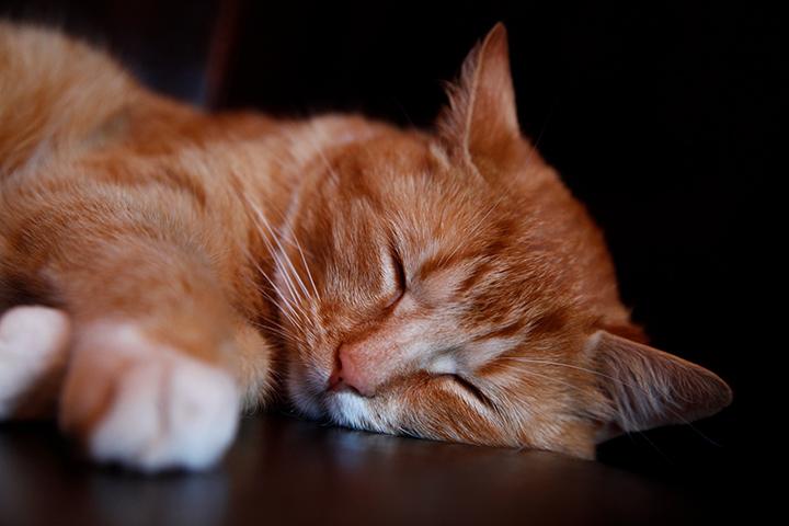 แมวแก่จะนอนเยอะกว่าปกติ