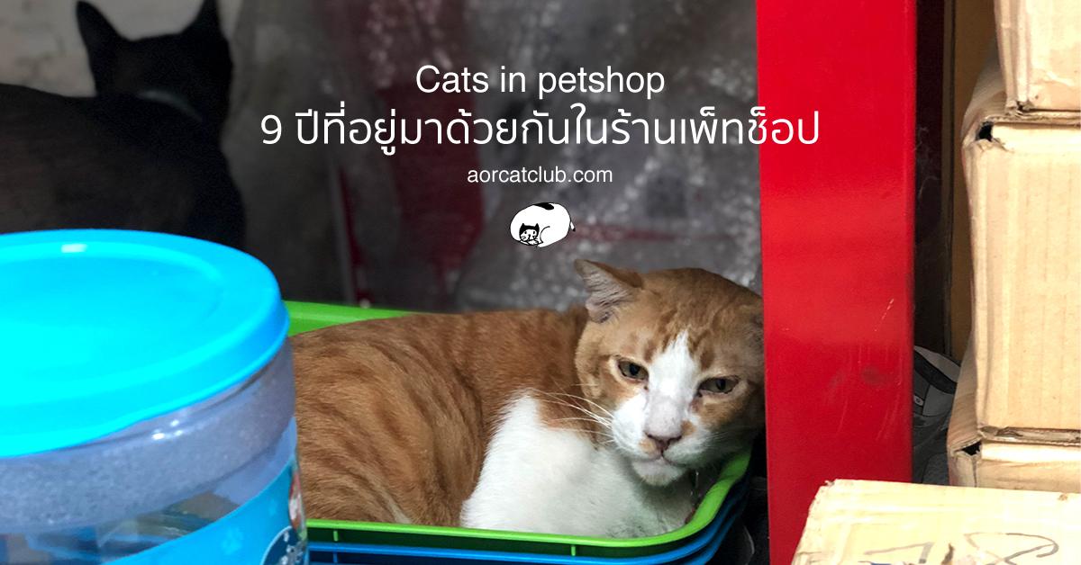 แมวจรในร้านขายของ
