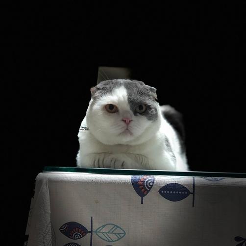 โกเมส เป็นแมวที่ชอบให้มีระยะห่าง