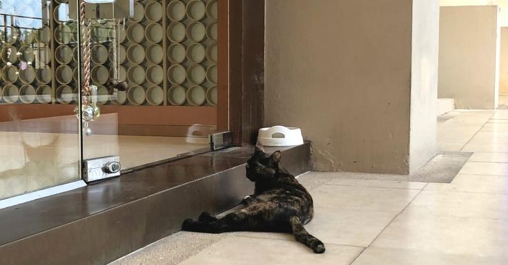 เลี้ยงแมวนอกบ้าน