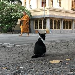 แมวจะได้เกิดเป็นคนมั้ย