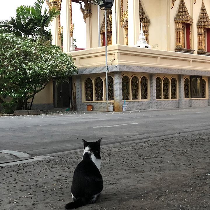 แมวอยากเป็นคน