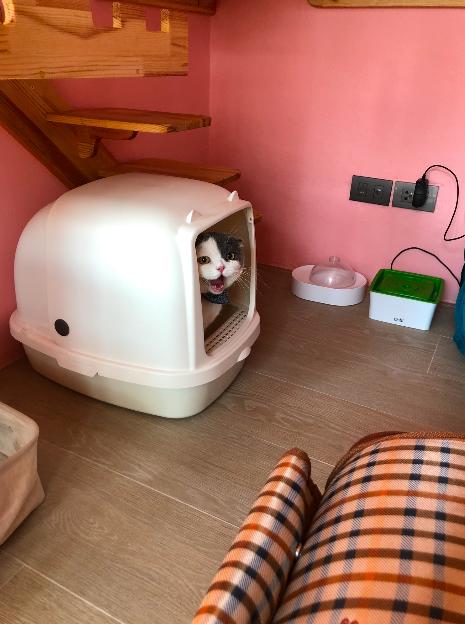 วันแรกของแมวที่โรงแรมแมว เหมือนพาลูกไปโรงเรียนอนุบาลวันแรก