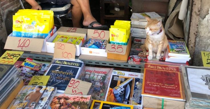 แมวที่เลี้ยงตามร้านช่วยเรียกลูกค้า