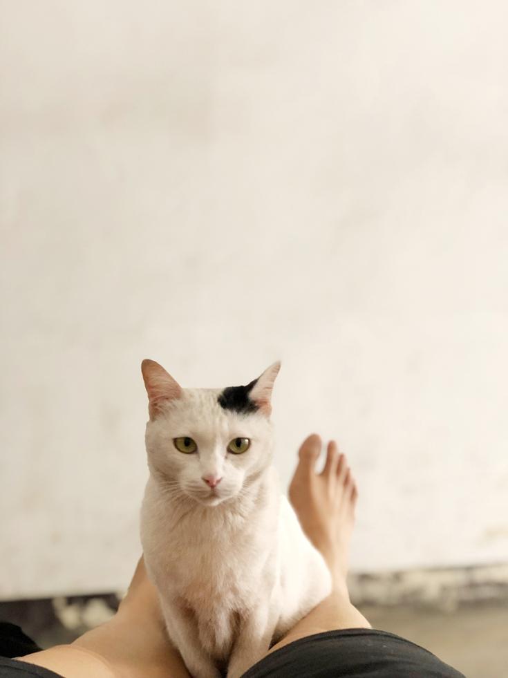 แมวแปลกหน้าเดินมานั่งบนตัว