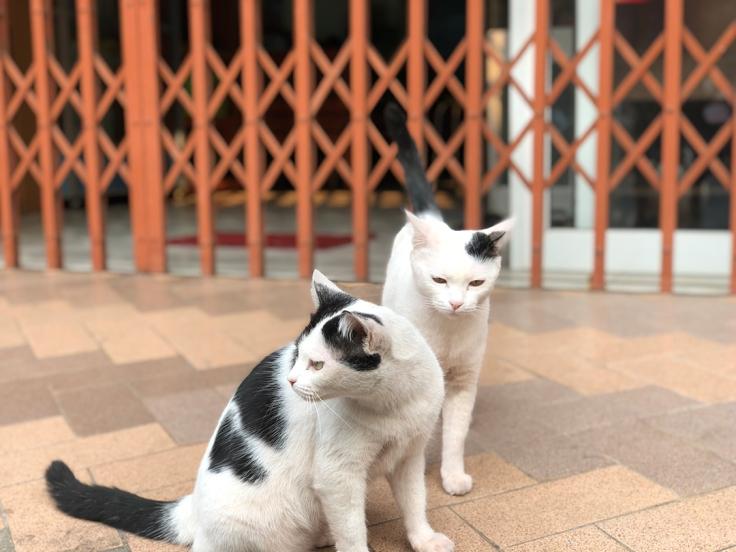 แมวแม่ลูกรักกัน