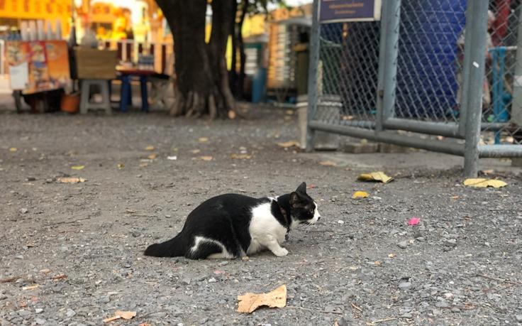 สัณชาตญาณการล่าของแมว