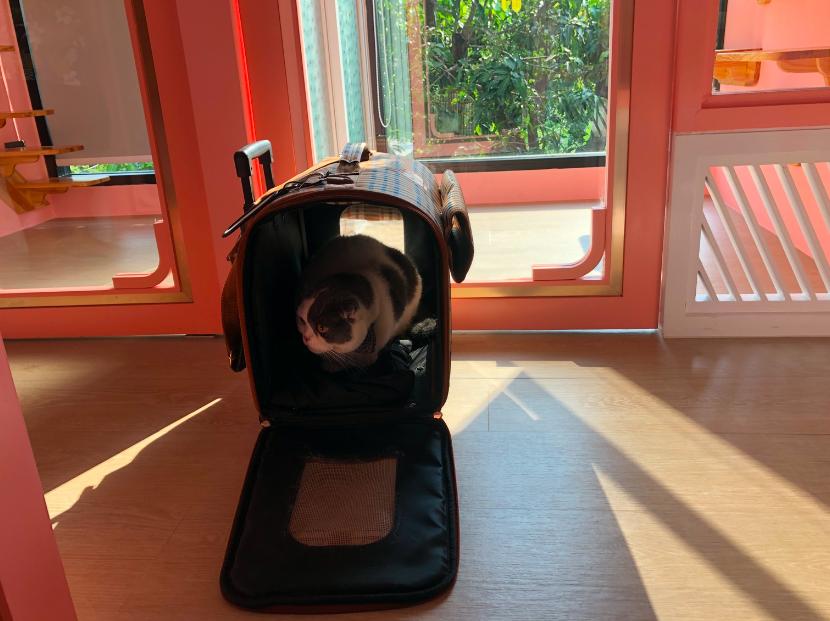 วันแรกของแมวที่โรงแรมแมว