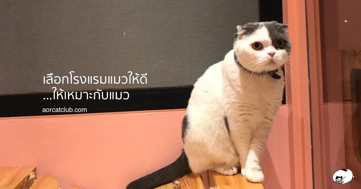 แนะนำโรงแรมแมวแถวลาดพร้าวเลียบทางด่วนรามอินทรา