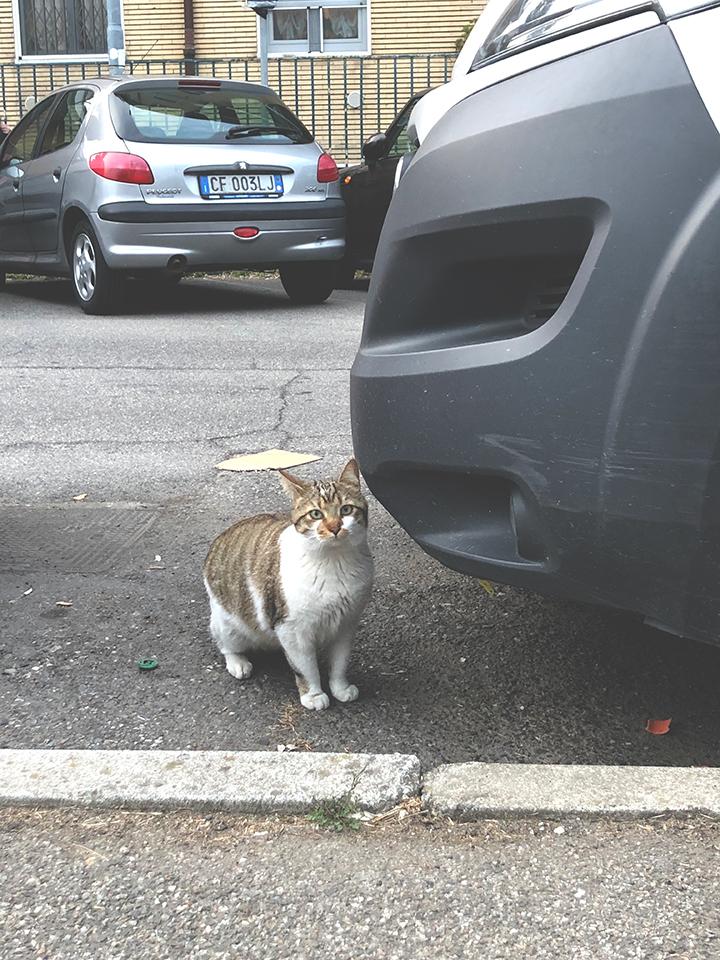 แมวจรในอิตาลีน่ารักแค่ไหน